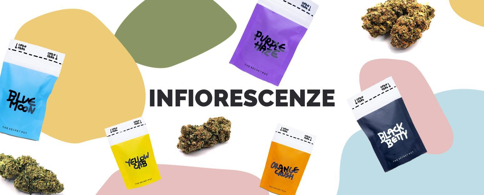 infiorescenze-cannabis-light